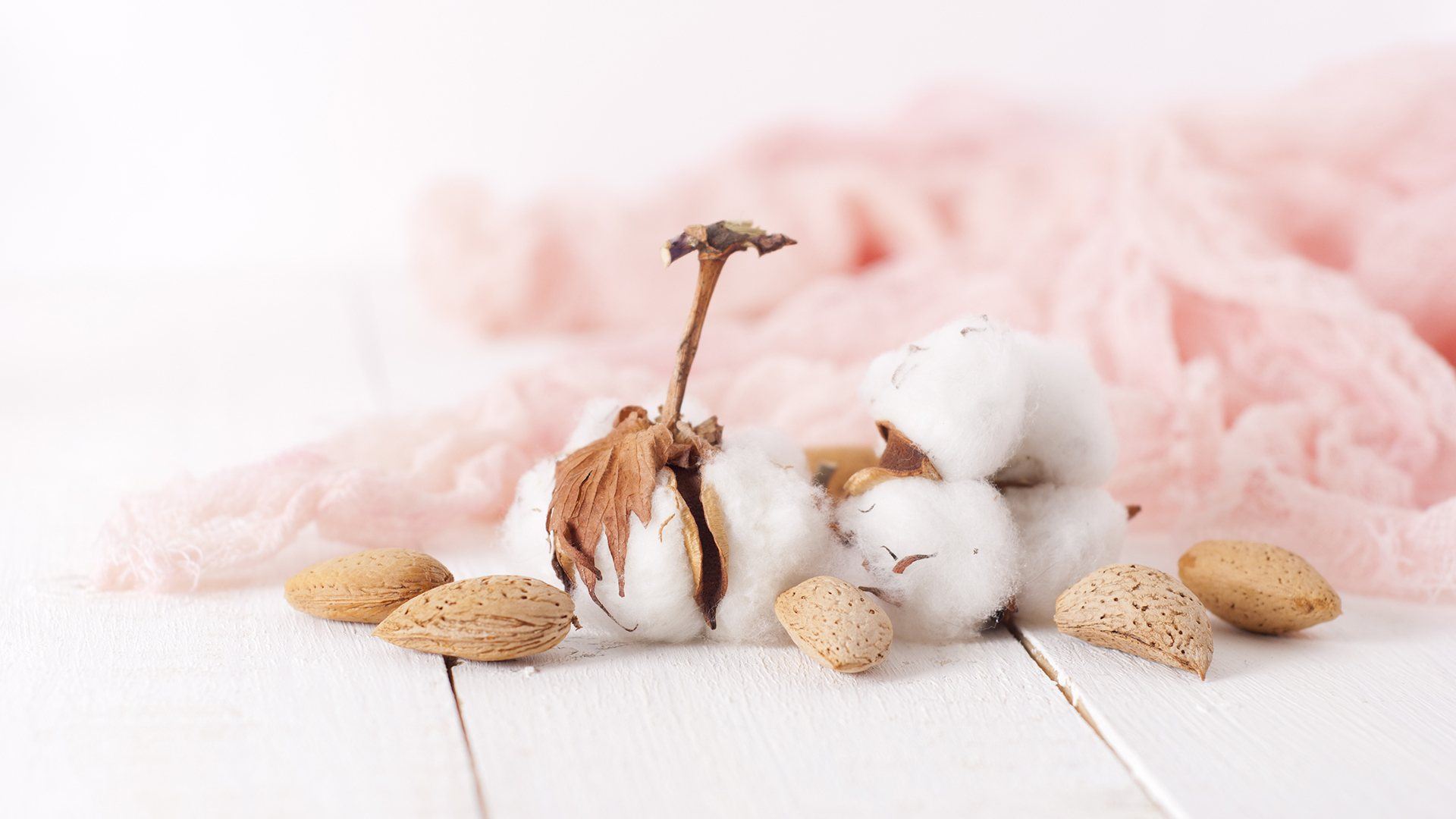 Why Egyptian Cotton - Cotton Flower - My Cotton Dream